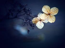Whisper. by OliviaMichalski