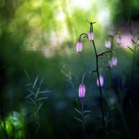 A Summer Dream. by OliviaMichalski