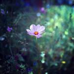Mysterious Wonders. by OliviaMichalski