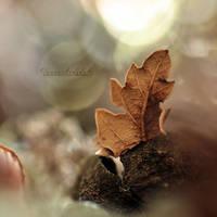 Autumn Love.