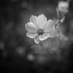 Gentle Touch. by OliviaMichalski