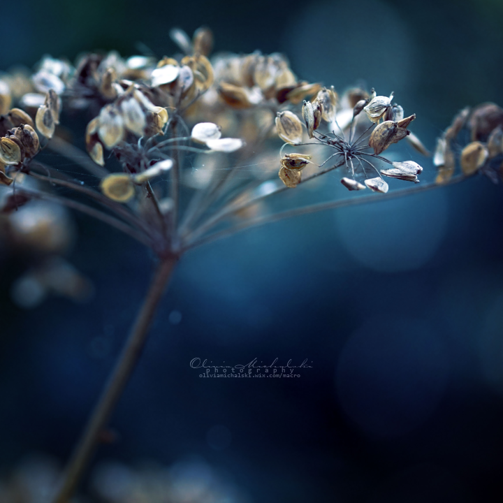 Let the Mind flow. by OliviaMichalski