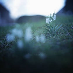 Fragility on a Hill. by OliviaMichalski