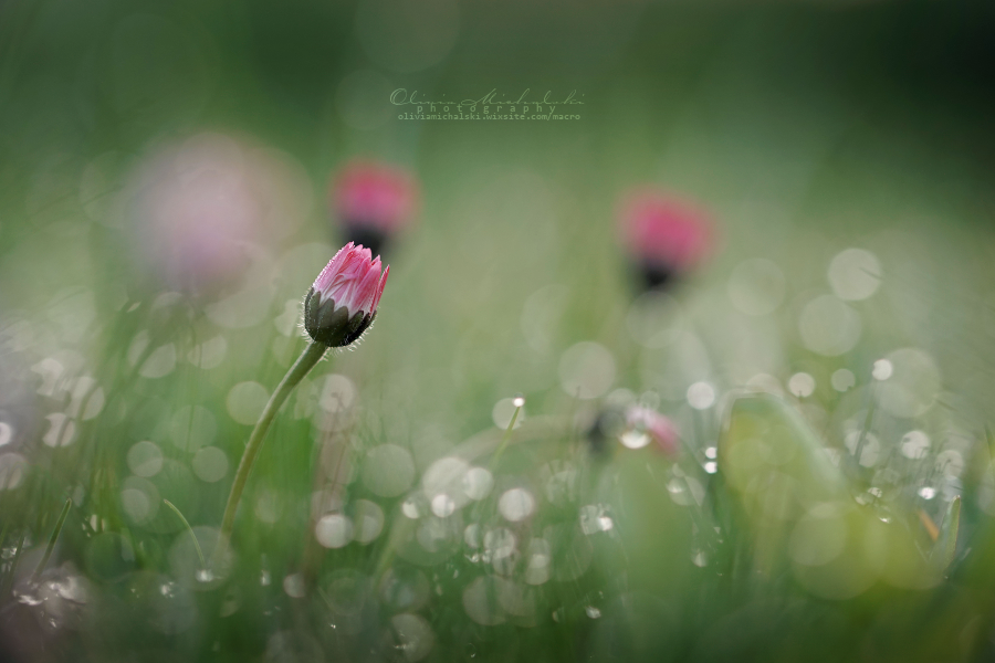 Diamond Daisy. by OliviaMichalski