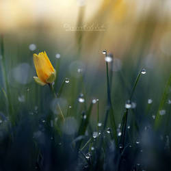 When the Flowers Sleep. by OliviaMichalski