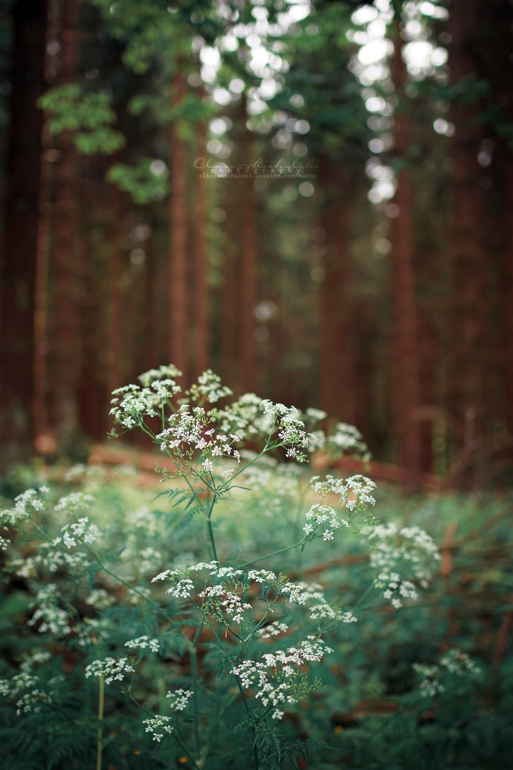 Melody of the Forest. by OliviaMichalski