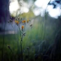 Midsummer Dream. by OliviaMichalski
