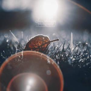 Flares.  by OliviaMichalski