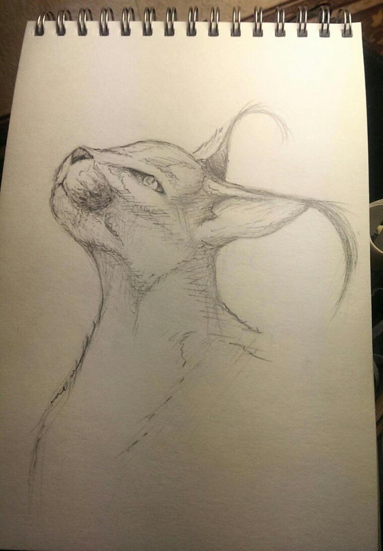 Lynx by heavy-mixture