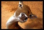 Yoga Deer