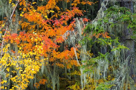 China | Autumn Colours