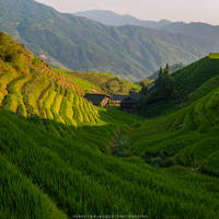 China - Terraces by slecocqphotography