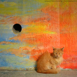 Chile   Patagonian Kitten by slecocqphotography