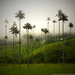 Giants of Colombia by slecocqphotography