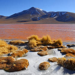 Bolivia - Of blood and ice by slecocqphotography