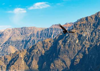 Peru   El condor pasa by slecocqphotography