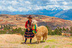Peru | Sacred Valley Alpaca by slecocqphotography
