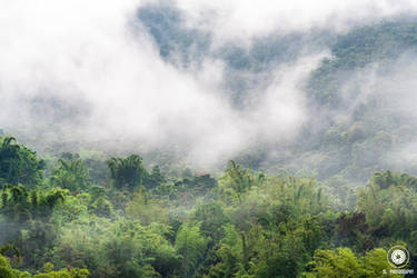 Cloud Forest Dreaming by slecocqphotography