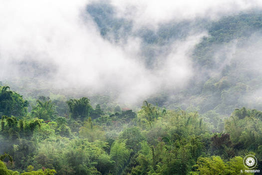 Cloud Forest Dreaming