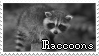 Raccoons|Stamp by Crvyons