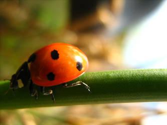 Ladybug by Es-chan
