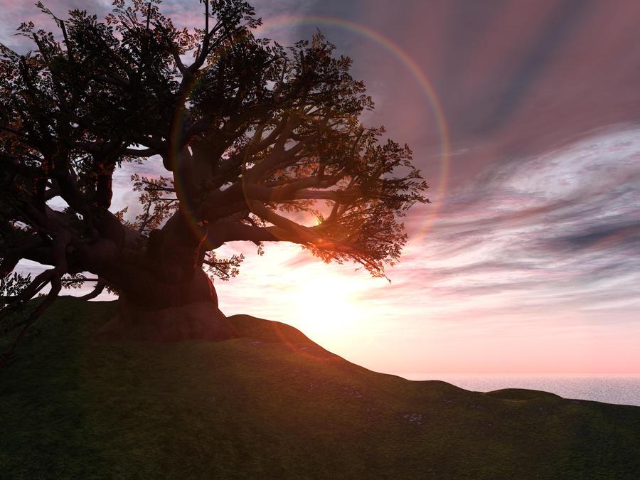 Baobab Tree - High Res by wiyaneth