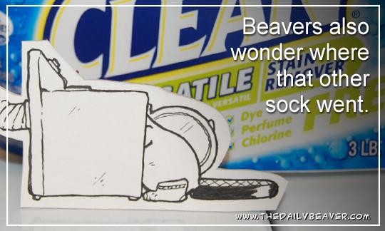 Daily Beaver - Missing Socks by RedWood-Beavers
