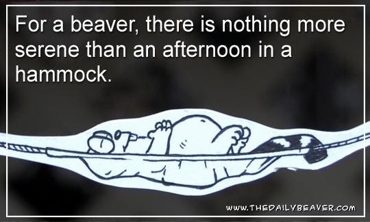 Daily Beaver - Hammock by RedWood-Beavers