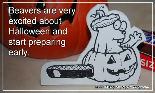 Daily Beaver - Jack O Lantern by RedWood-Beavers