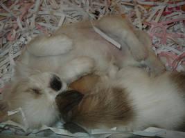 puppies by mandymaynem
