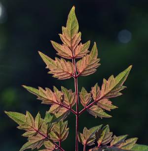 Autum Leaves by SAVALISTE