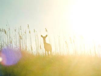 Morning Deer by JAE462