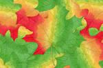 Autumn Leaf in Marker