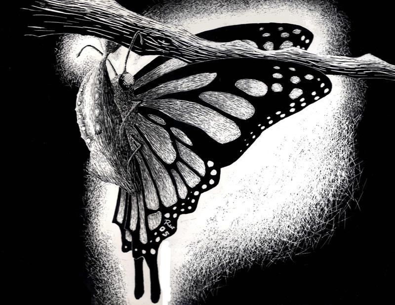Butterfly scratchboard - photo#12