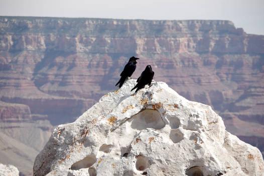 Ravens Enjoying the View