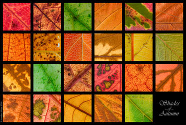 Shades of Autumn by SnuggyPossum