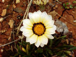 white flower by AbedArslan86