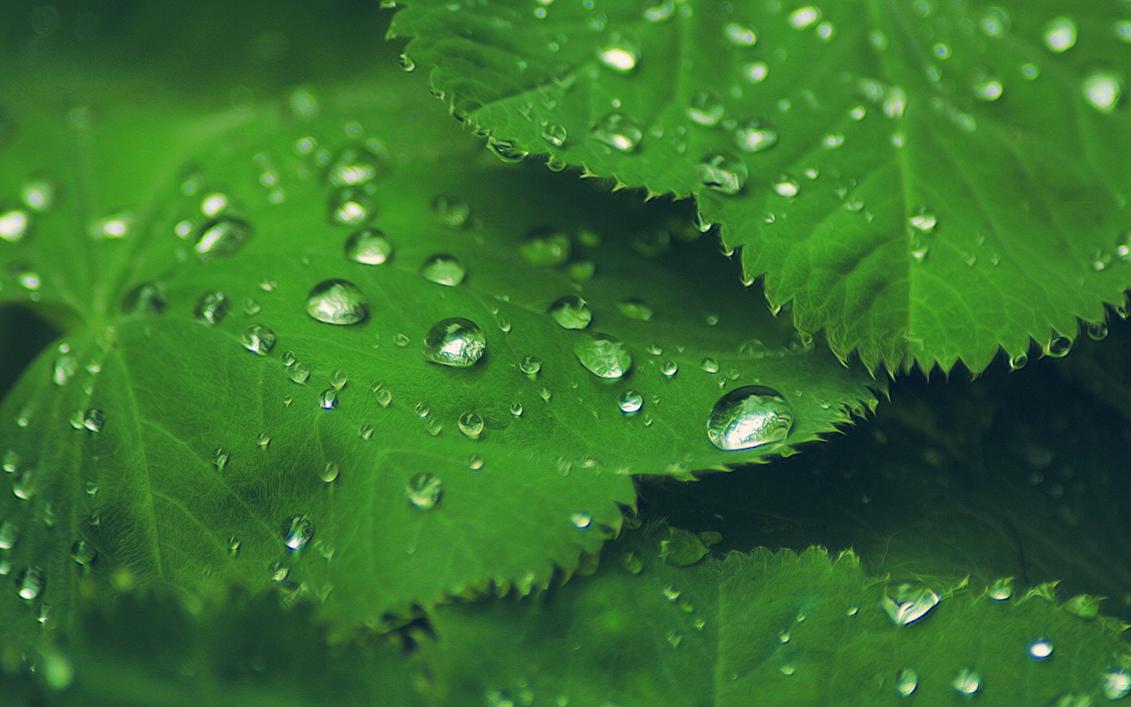 Leaf Drops by Grazzhopper96