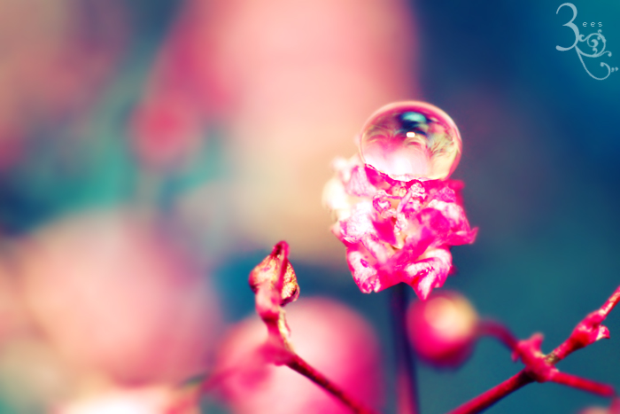 Droplet in a tiny flower ... by aoao2