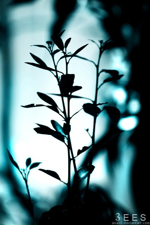 Light it up ... by aoao2