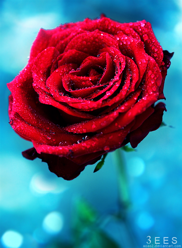Romance ... by aoao2
