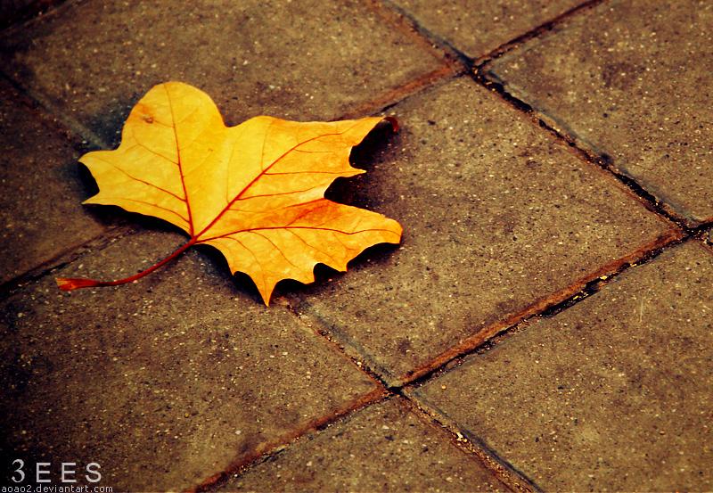 Autumn leaf ... by aoao2