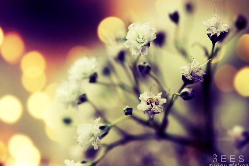 Little flowers II ... by aoao2