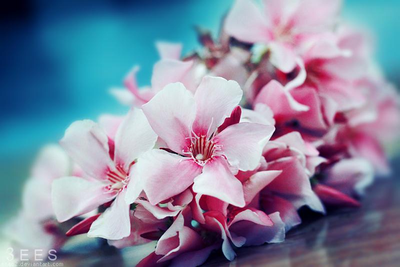 Simple beauty ... by aoao2