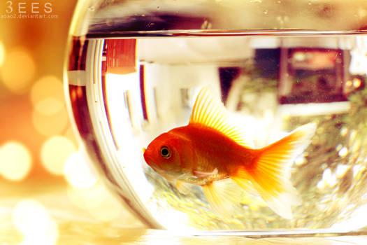 Golden fish ...