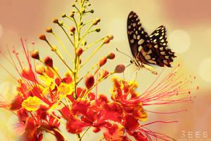 Butterfly kiss ...