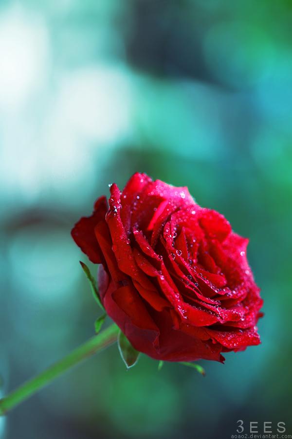 Bleeding love ... by aoao2