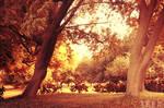 Autumn light ...