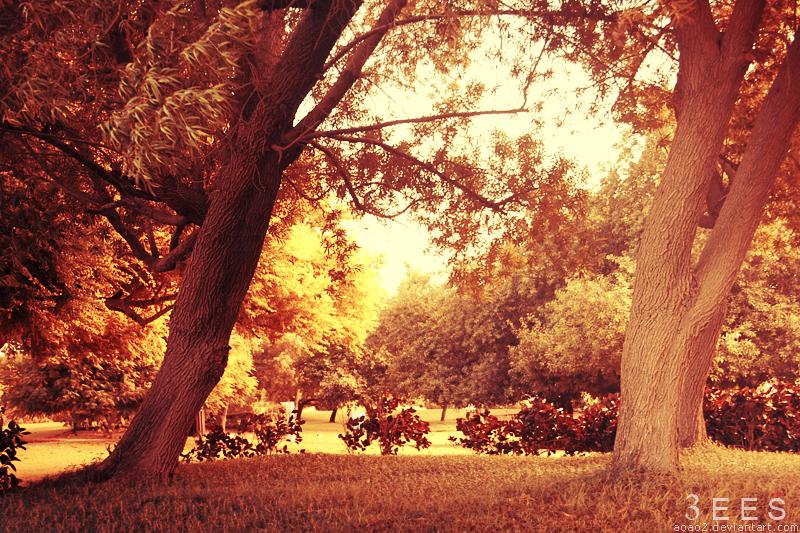Autumn light ... by aoao2