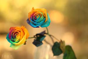 Rainbow roses ... by aoao2